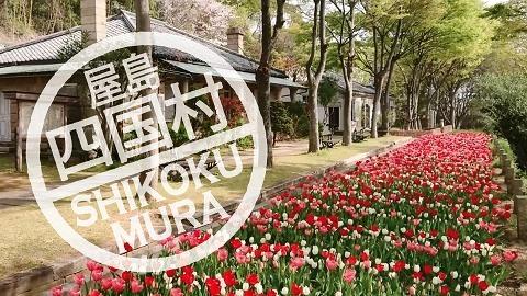20210330movie_tulip_cherryblossum.jpg