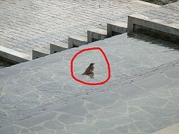 水浴びをする小鳥